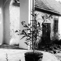 Égkőris Vendégház Bakonyszücs - Szallas.hu Plants, Plant, Planets