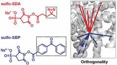 #AChem: Complementary Benzophenone Cross-Linking/Mass Spectrometry Photochemistry #MassSpec