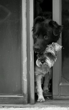 Beautiful Dog Black and White Photography