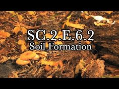 I would use this informational video as an introduction to our lesson that covers standard:  SC.2.E.6.2 Describe how small pieces of rock and dead plant and animal parts can be the basis of soil and explain the process by which soil is formed.
