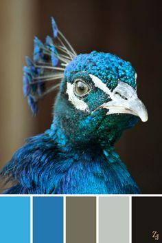 ZJ Colour Palette 98 #colourpalette #colourinspiration Peacock Color Scheme, Paint Color Schemes, Colour Pallette, Color Combinations, Paint Colors, Peacock Colors, Peacock Feathers, Color Photography, Pet Photography
