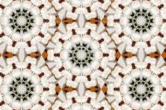 The native New Zealand/ Aotearoa Manuka Flower as a Mandala. Kiwiana, Spiritual Practices, Flower Mandala, Beauty Photos, Image Now, Printable Art, New Zealand, Nativity, Meditation
