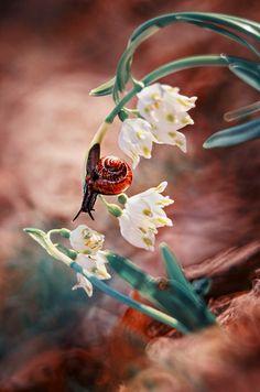 Snail by Jan Siwmir