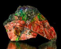 "3.4"" Brilliant Red w/Green Iridescent Flashy AMMOLITE (Ammonite) Canada. /  Mineral Friends <3"