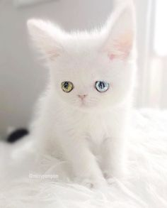 This is Pam Pam, the kitty with the most mesmerizing eyes ever. See for yourself, but don't look at them for too long or you might never be able to look away again!