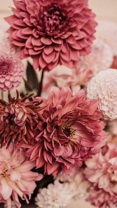 Photo by Anita Austvika on Unsplash Flower Phone Wallpaper, Free Iphone Wallpaper, Best Iphone Wallpapers, Wallpaper Free Download, Pretty Wallpapers, Aesthetic Iphone Wallpaper, Nature Wallpaper, Latest Wallpapers, Pink Flowers