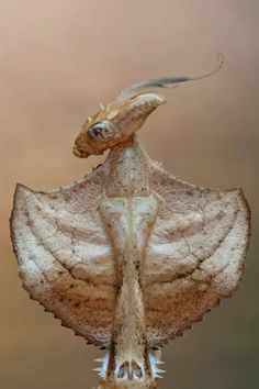 Looks like the Alien from Sigornie Weaver movie. That is some freaky looking mantis.