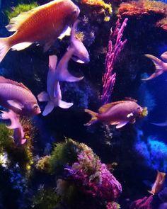#Rocher #museeoceanographique #monaco #sea #oceano #pesci #colori #nature #nofilter #museo #france #corallo #infondoalmar #costaazzurra by saracalta_ from #Montecarlo #Monaco