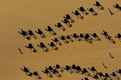 YannArthusBertrand2.org - Fond d écran gratuit à télécharger || Download free wallpaper - Caravanes de dromadaires près de Fachi, désert du Ténéré, Niger (18°14' N – 11°40' E).