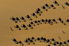 Yann Arthus-Bertrand - Inspiration from Masters of Photography - 121Clicks.com