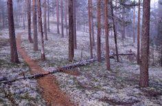Rokuan kansallispuisto - Metsähallitus Peace Of Mind, Finland, Habitats, Paths, Villa, Hiking, Landscape, Nature, Outdoors