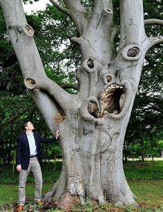 Este árbol ♥ horrible en los terrenos de Stowlangtoft Hall, cerca de Bury St Edmunds, Suffolk, comparte un parecido asombroso con Edward Munch Scream pintura clásica.