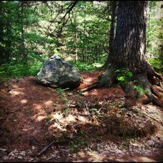 """A rock surrounded by three large pines with a plaque that reads """"rocky and the three sisters"""" - Reed City, MI"""