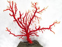 An easy tutorial to make your own DIY faux red coral using sticks and paint.