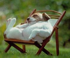 A dog sleeping on its back on a lawn chair.