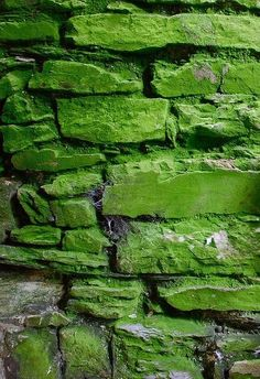 Green | Grün | Verde | Grøn | Groen | 緑 | Emerald | Lime | Colour | Texture | Style | Form | Pattern |