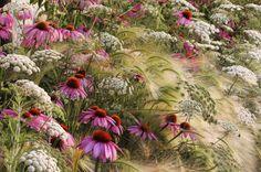 Ombrelle, margherite, spighe: festosa confusione di trame e forme (Ammi majus - Hordeum jubatum - Echinacea purpurea 'Magnus').