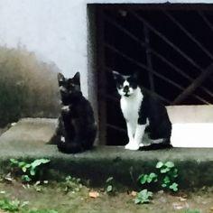 В городе очень много кошек и котов. Не так, как в Турции, конечно. Но у каждого дома, близ подвалов, обязательно встретишь пару-тройку.