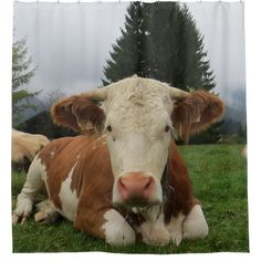 Close up of a brown and white cow laying down in a field. 2 other cows are in the background. In the background is hills and pine trees. Cow Paintings On Canvas, Cow Canvas, Farm Animals, Cute Animals, Cow Photos, Cow Pics, Fluffy Cows, Beautiful Brown Eyes, Baby Cows