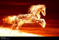 3D Fantasy Art Horses | fire horse by Marcus86