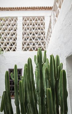 This beautiful house is ideally located in the heart of the souk in Taroudant, Morocco. It belongs to landscape architects Arnaud and Eric Maurières Ossart who divide their time between Mexico and Tar Patio Interior, Interior And Exterior, Cacti And Succulents, Cactus Plants, Cactus Vert, Tall Cactus, Outdoor Spaces, Outdoor Living, Plants Are Friends