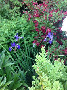Blomstereksempler rundt fra haven og de forskellige bede