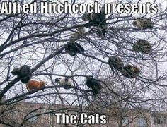 Funny pictures about Cat lady tree. Oh, and cool pics about Cat lady tree. Also, Cat lady tree. Crazy Cat Lady, Crazy Cats, Humor Animal, Animal Pictures, Funny Pictures, Funny Pics, Funny Animals, Cute Animals, Funny Horses