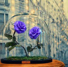 Rosas naturais conservadas em domos de vidro que podem durar por até três anos sem água e luz do sol