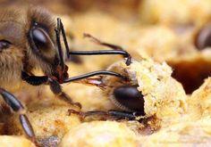 Beekeepers timeline