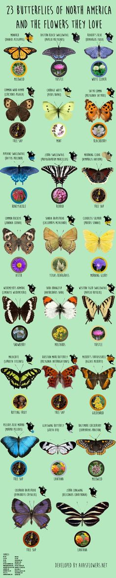 Native butterflies and the flowers they love | Gardening Project Idea & Tips | DIY Project Difficulty: Simple MaritimeVintage.com
