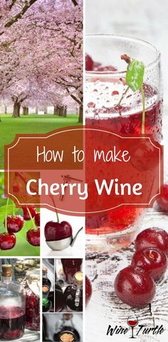 Want to make cherry wine from scratch? Check this cherry wine recipe out! Gifts For Wine Lovers, Wine Gifts, Homemade Wine Recipes, Homemade Liquor, Wine Tasting Course, Cherry Wine, Wine Magazine, Doja Cat, Wine Deals