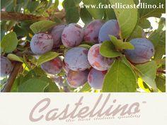 SUSINE DALMASSINE www.fratellicastellino.it