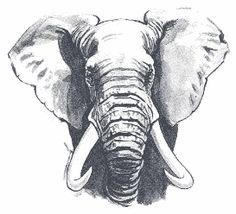 elephant head drawing - Google Search