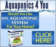 Good setup.  Basement Aquaponics & Raising Tilapia