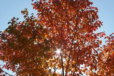 フォト - Google+ Autumn, Amazing, Places, Google, Fall, Lugares