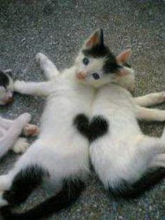 Hearts on animals | Have you seen or owned any animals with interesting markings? If you ...