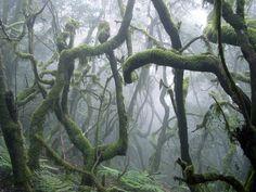 Garajonay National Park, La Gomera, Spain  book online at www.gomeraferienhaus.de