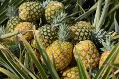 The pineapple pesticide made its way into milk in Hawaii and then into men's brains. A study is the latest to link pesticides to Parkinson's.