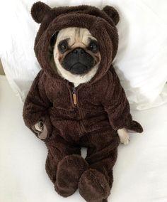 Ay me muero por el amor de perrito #pug