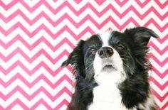 5 Home Pet Photography Tips | Pretty Fluffy