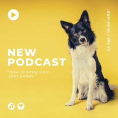 Own a pet business or have a podcast for pet owners like you? Here is an Instagram Post Template that you can use and re-use on Canva!