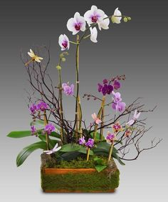 A Blooming Orchid Garden-This lovely assortment of the season's nicest available orchid plants, combined together in a single container, is certain to bring years of enjoyment. Orchid Flower Arrangements, Orchid Centerpieces, Ikebana Flower Arrangement, Blooming Orchid, Blooming Plants, Orchids Garden, Orchid Plants, Mardi Gras, Gardening