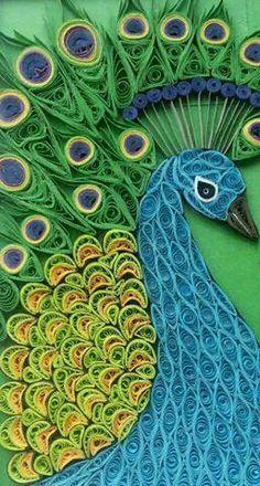 Peacock  Beautiful