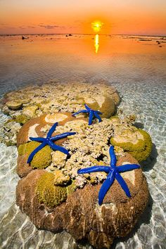 STARFISH ON REEF at Lady Elliot Island Eco Resort ~ southern tip Great Barrier reef. Photo by Darran Leal via World Photo Adventures.