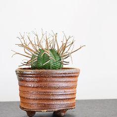 . . だいぶ陽が高く日差しも強くなってきたのでベスポジ求めて植物たちの置き場所の模様替え . すぐ日焼けしちゃうバリダの置き場に困ります . #ユーフォルビア#スーパーバリダ #Euphorbia#supervalida#cactus#caudex#succulent#plants#interior#多肉植物 by akahiron