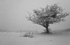 At the edge of snowfall … by Ирина Заграничная by imogene