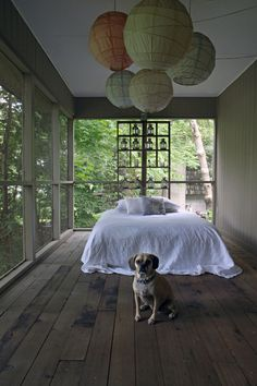 "Sneak Peek: Best of Dogs. ""Jack the Puggle out on the sleeping porch near Minneapolis."" #sneakpeek"