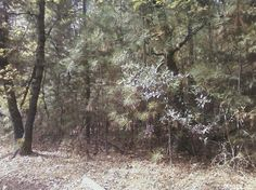 0 Oak Hill Rd, Placerville, CA 95667 — Build your dream home on this beautiful wooded property.  Adjacent property at 4800 Oak Hill Road also for sale at $249,950 See MLS #14066185.  Live next door while you build your dream home.  What an opportunity!  Close to town but feels so far away.