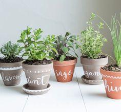 Harvesting & Preserving Herbs: tips & tricks!