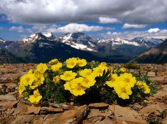 printemps-Montana